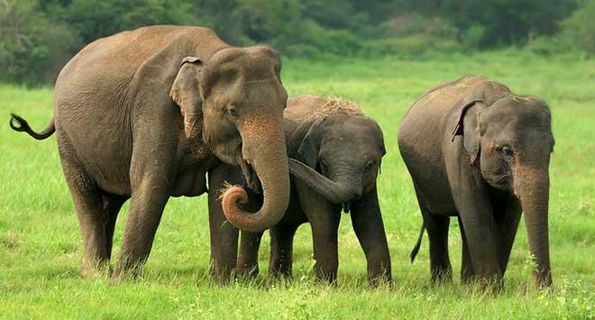 elephant-herd2